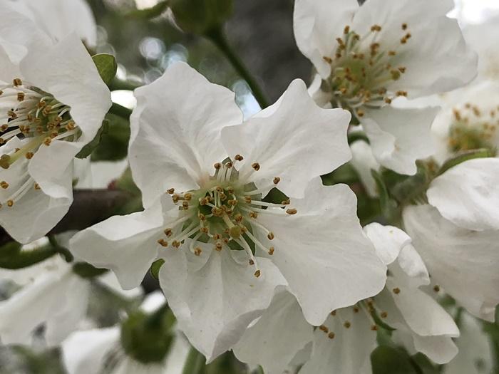 フルーツ王国ならでは!春の花々を愛でる