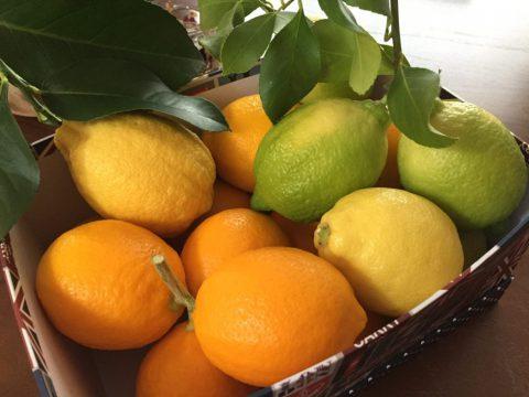 山梨県産レモン