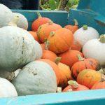 野菜のテーマパーク「京都野菜耕房」へようこそ