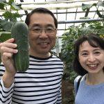 加賀野菜『加賀太きゅうり』と『金時草』を訪ねて