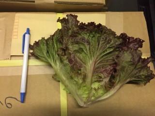 野菜全般の規格・品質について【台風21・22号の影響】