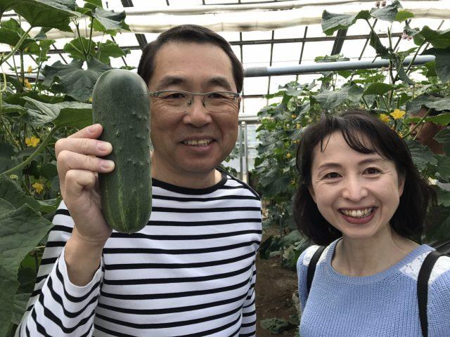 加賀野菜『加賀太きゅうり』と『金時草』