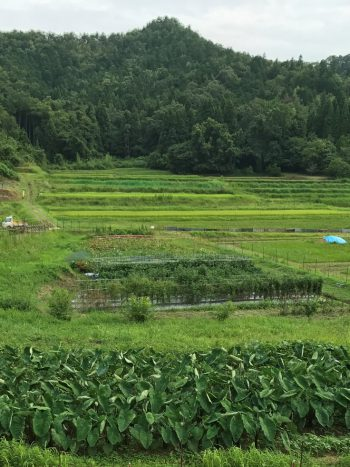 京都野菜耕房風景