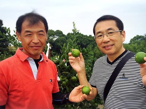 火の国の柑橘〜秋を届ける「肥のあかり」〜