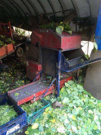 枝豆の機械