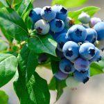 夏のフルーツを楽しもう!