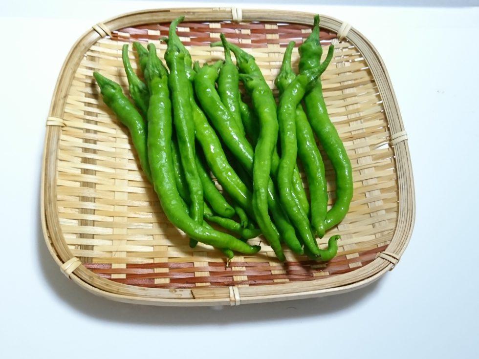 京の伝統野菜「伏見甘長とうがらし」で暑い夏を乗り切る!