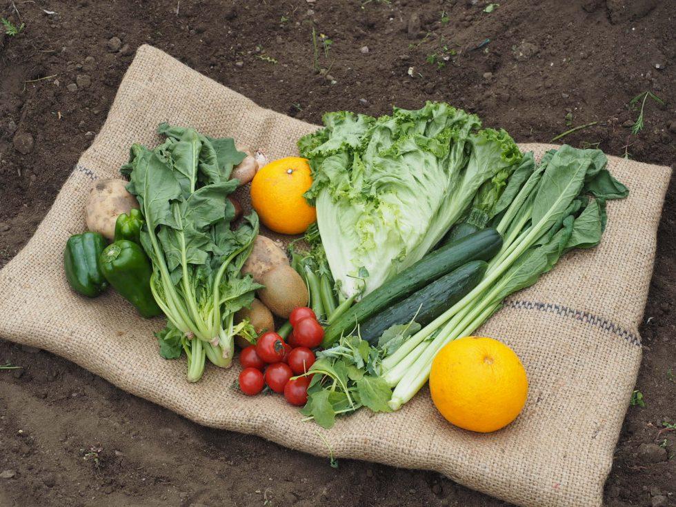 【有機野菜おまかせセット】野菜の美味しさを丸ごと楽しむレシピ集