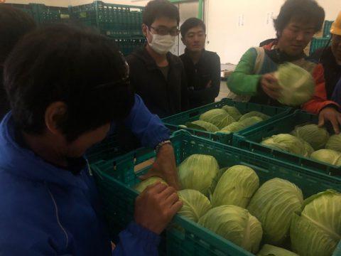 野菜くらぶ静岡