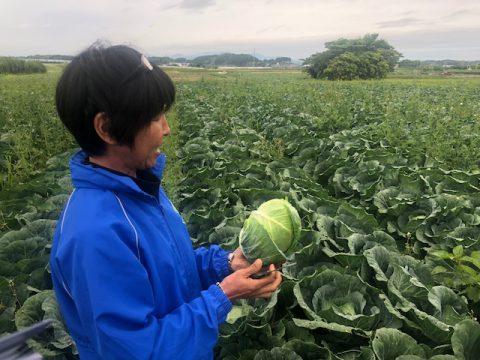 産地レポート_野菜くらぶ静岡