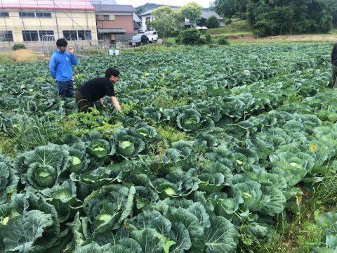 産地レポート_野菜くらぶ