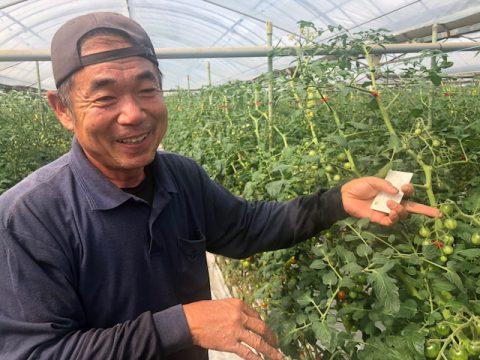 まつの提携産地レポート_JA尾鈴