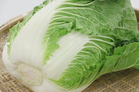 菅平高原・中曾根農場の白菜