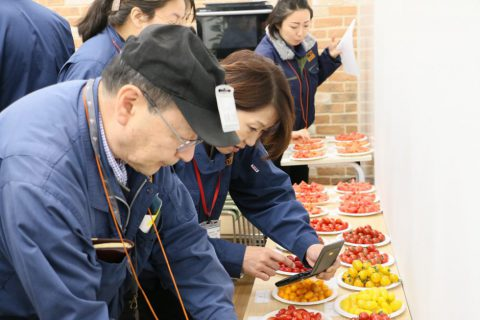 まつの_トマト品評会