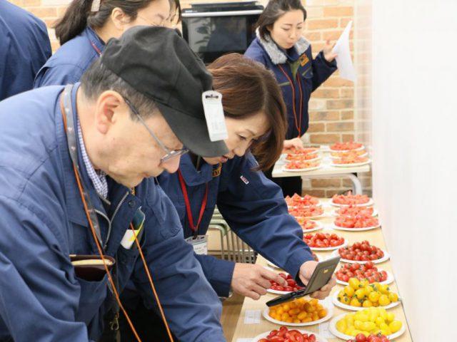 まつの幸せ野菜ボックスアイテム選定「トマト23種品評会」を行いました