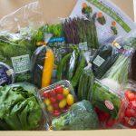 【まつの幸せ野菜ボックス】で時短&簡単ヘルシー料理を