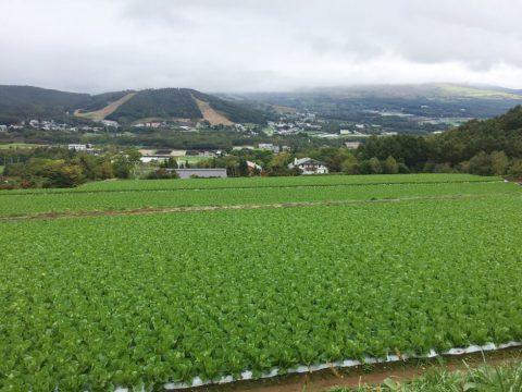 菅平高原・中曽根農場