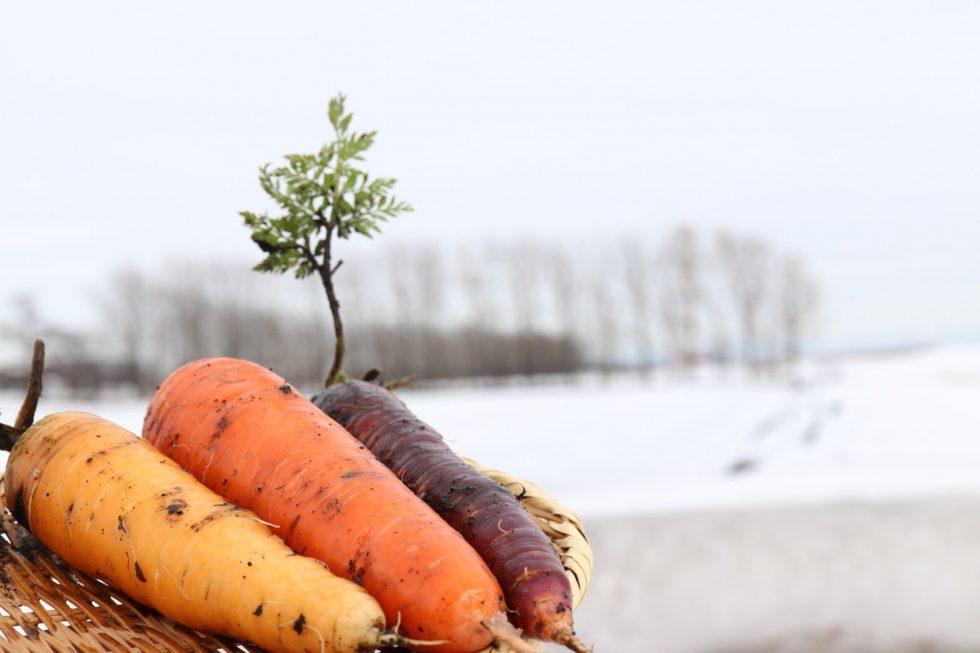雪国のご褒美!雪下カラフルにんじん初収穫