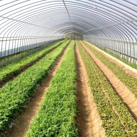 久保田農園が生み出す感動の香り野菜!