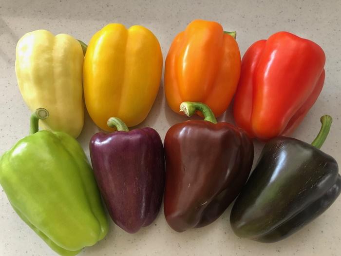 積算温度が色づきの決め手!8色の彩りパプリカ
