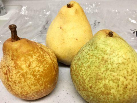 西洋梨3種外観