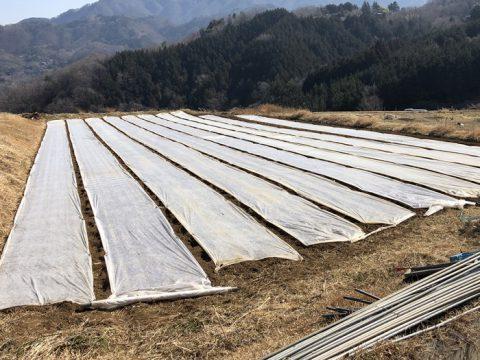保温資材の畑