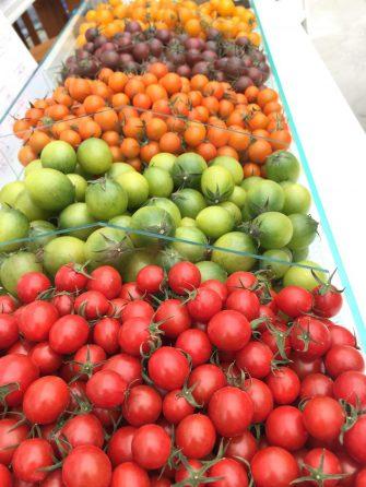 須藤物産カラフルミニトマト