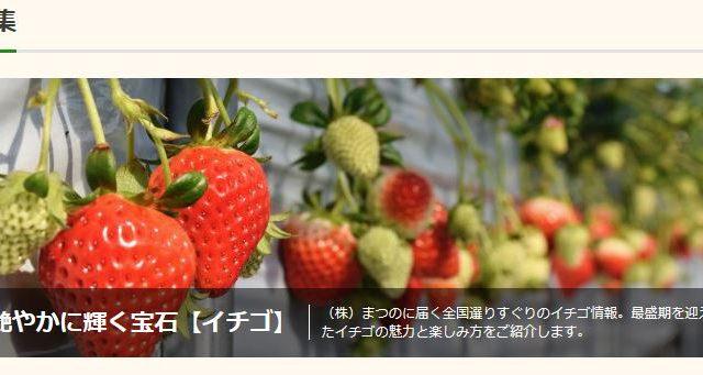 艶やかに輝く宝石「イチゴ」特集 実施中【まつのベジフルサポータージャーナル】