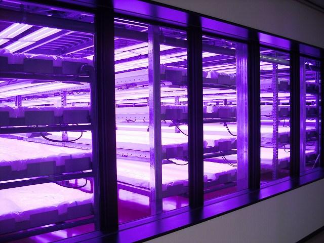 地域農業再生への新たな取り組み【福島県川内村農産物栽培工場稼動】