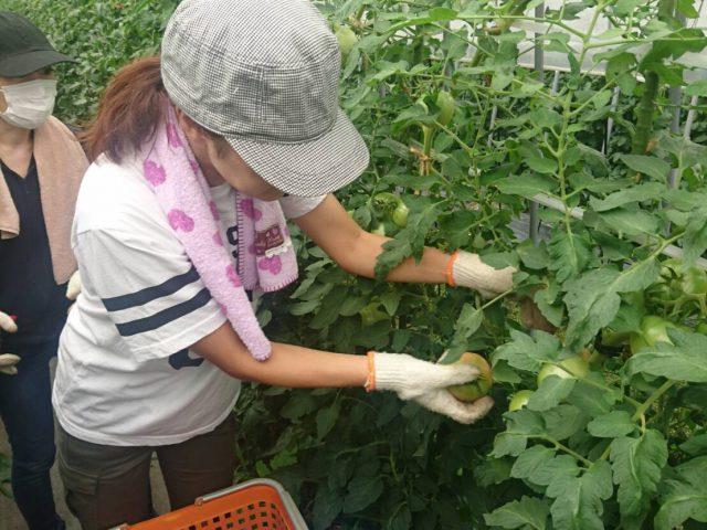 『モスの産直野菜フェスタ』in福島 8月19日~27日!