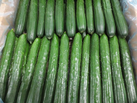 胡瓜を200本発注してしまったが、20本に訂正して納品された