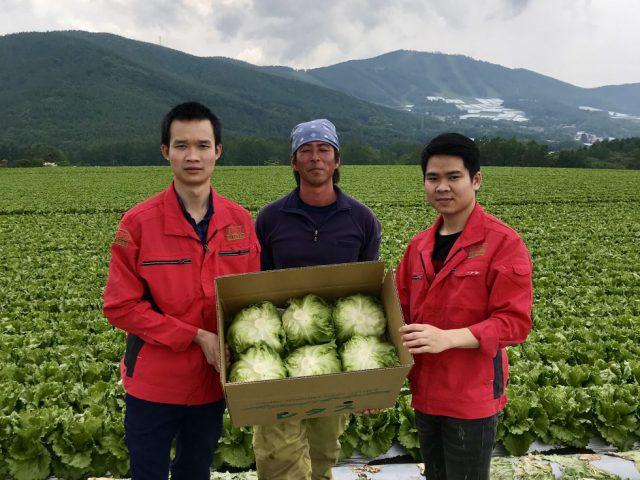 【提携産地研修】長野県菅平高原でレタスの収穫体験