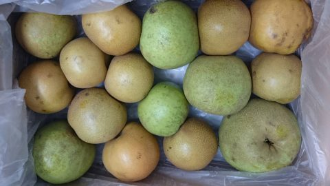 台風の被害を受けた梨を乾燥ベジフルに