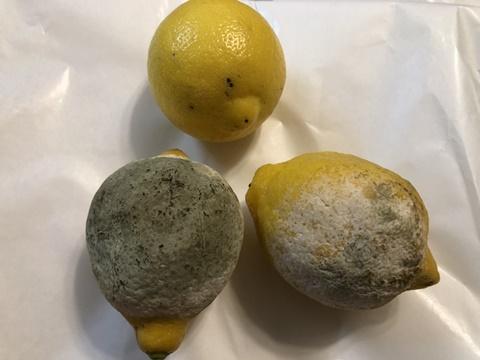 レモンにカビが生えている