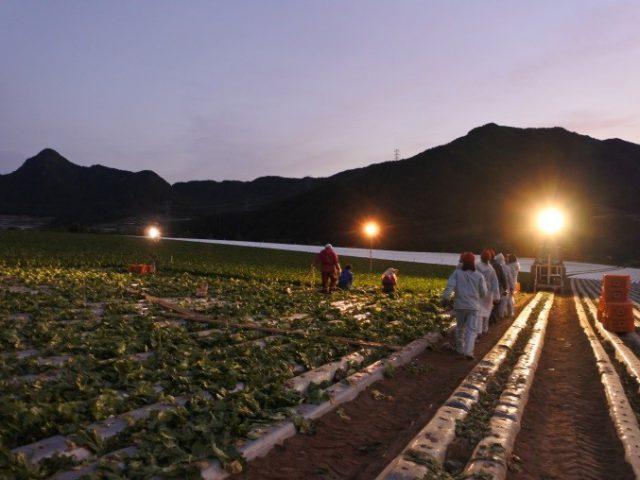 長野の高原レタス提携産地研修を実施しました