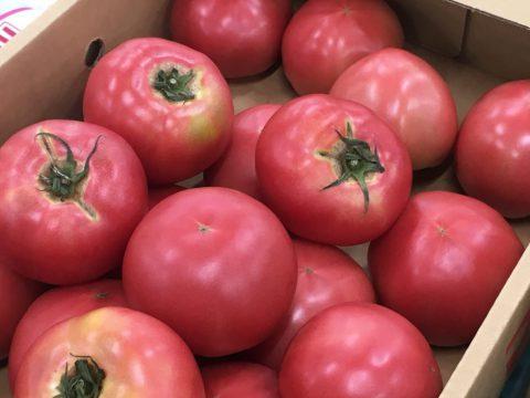 桃太郎トマト 選別