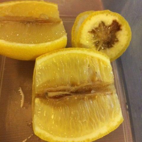 レモンを切ると黒く変色している