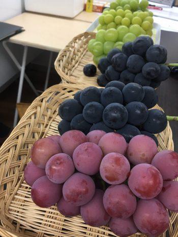 ブドウ食べ比べイベント