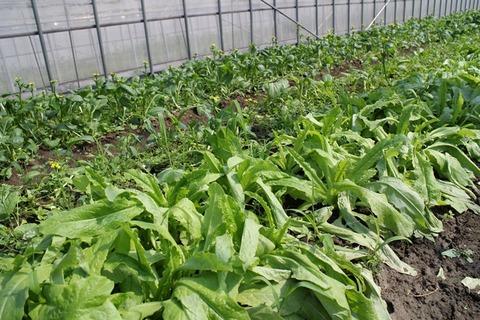 川辺農園 国産アジア野菜の簡単メニュー!
