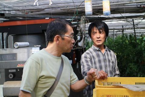 栃木・茨城のトマトの頼もしいつくり手(丸福農園、ファームアベタ)