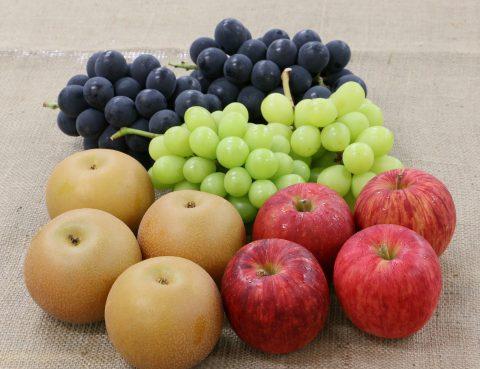 第11回まつの塾『秋の味覚の果物総論』を開催しました | 株式会社まつの