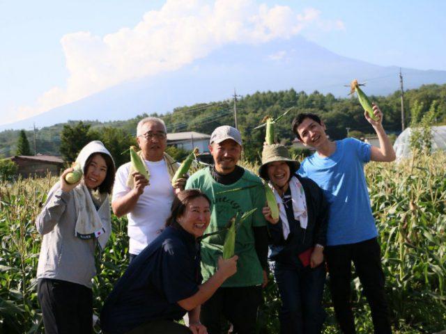 【ふるさと納税産直便】まつの産地応援隊が「富士山とうもろこし」1000本の収穫を応援