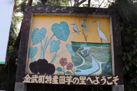 金武町田芋