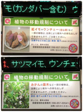 沖縄植物移動規制