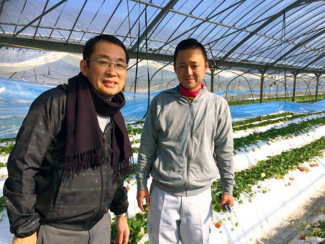 熊本の大玉いちご新品種 「ゆうべに」