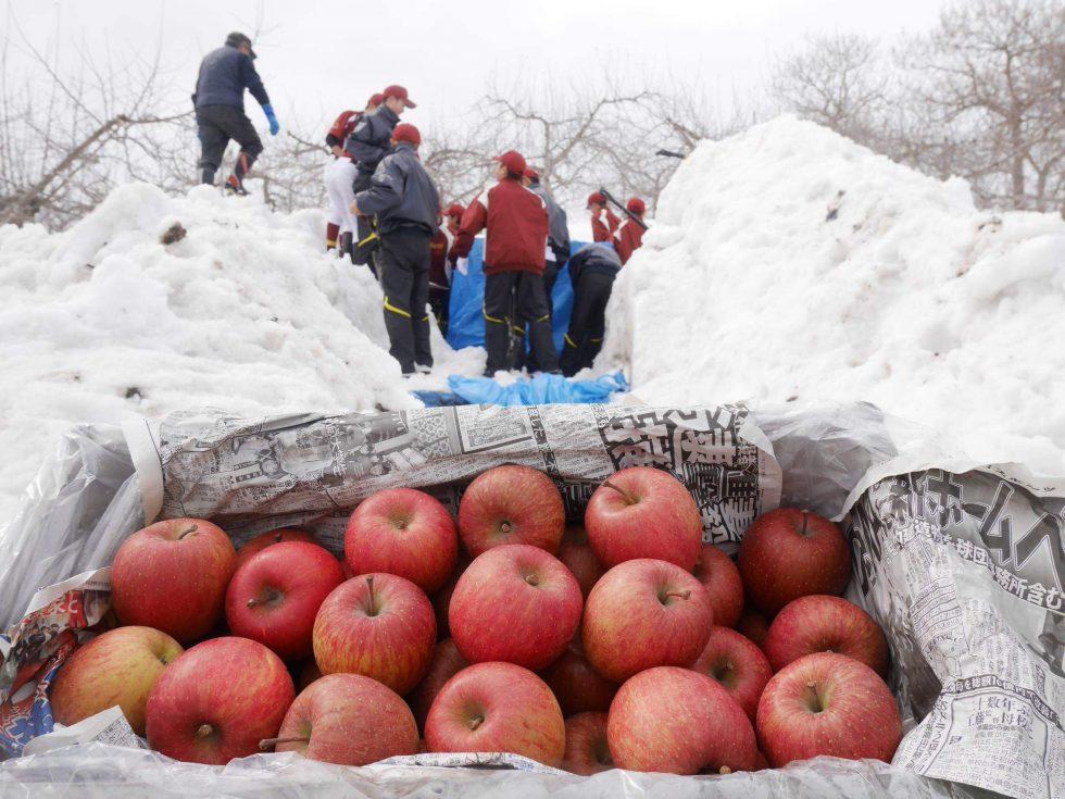 ジューシーであま~い健康果実「雪むろりんご」