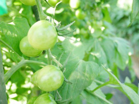 トキタ種苗