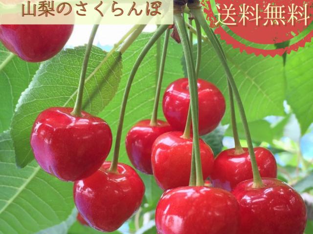 【期間限定販売】さくらんぼ「紅秀峰」