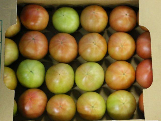 産地・商品状況160721│大玉トマト 東北産が本格的に開始