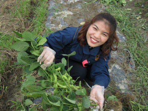 野菜くらぶ収穫祭